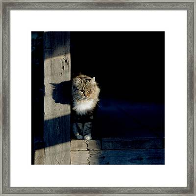 Barn Cat Framed Print by Art Block Collections