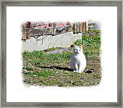 Barn Cat Framed Print by Susan Leggett