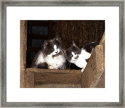 Barn Cats Framed Print