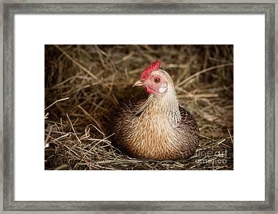 Barn Hen Framed Print by Edward Fielding