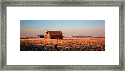 Barn In A Field, Hobson, Montana, Usa Framed Print by Panoramic Images