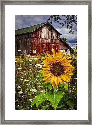 Barn Meadow Flowers Framed Print by Debra and Dave Vanderlaan