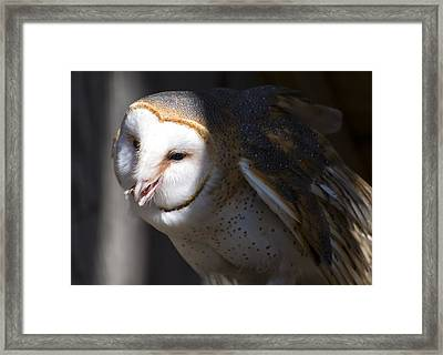Barn Owl 1 Framed Print
