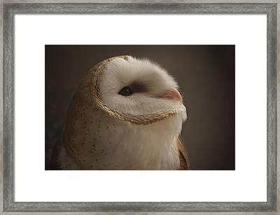 Barn Owl 4 Framed Print