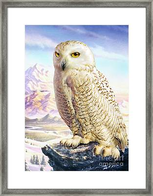 Barn Owl Framed Print by Adrian Chesterman