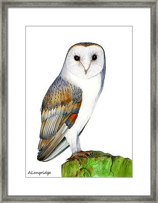 Barn Owl Framed Print by Alison Langridge