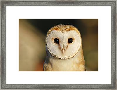 Barn Owl Beauty Framed Print by Roeselien Raimond
