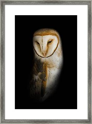 Barn Owl Framed Print by Bill Wakeley
