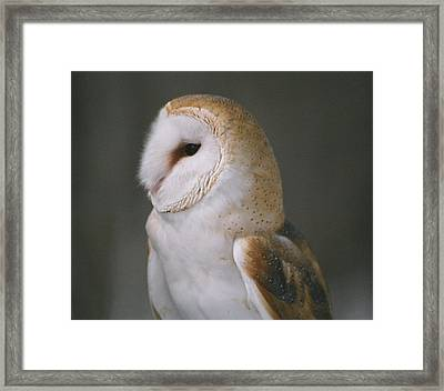Framed Print featuring the photograph Barn Owl by David Porteus