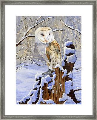 Barn Owl In Snow Framed Print by Anthony Forster