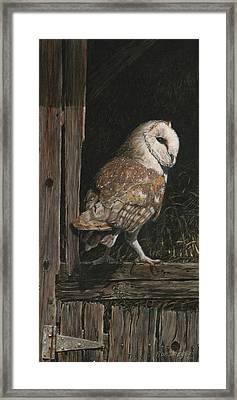 Barn Owl In The Old Barn Framed Print by Rob Dreyer