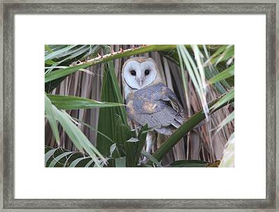 Barn Owl Framed Print by Joe Sweeney