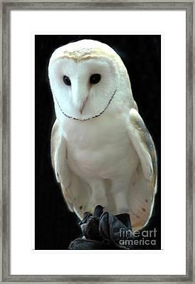 Barn Owl. Framed Print