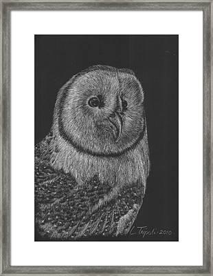 Barn Owl Framed Print by Lawrence Tripoli