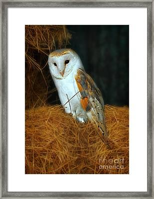 Barn Owl Framed Print by Louise Heusinkveld