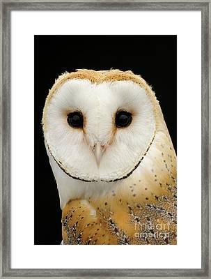 Barn Owl Framed Print by Malcolm Schuyl FLPA