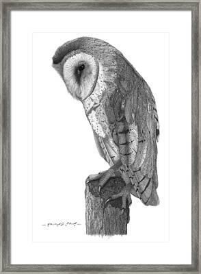 Barn Owl Framed Print by Michael Kreizel