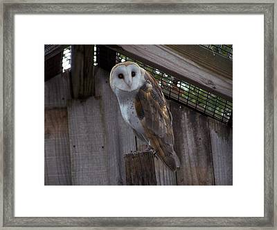 Framed Print featuring the photograph Barn Owl by Michele Kaiser
