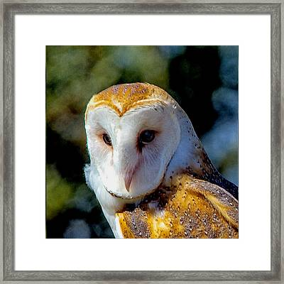 Framed Print featuring the photograph Barn Owl Portrait by Constantine Gregory