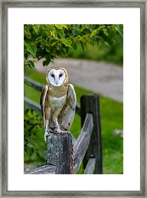 Barn Owl Framed Print by Randy Scherkenbach