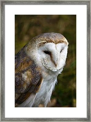 Barn Owl Framed Print by Scott Carruthers