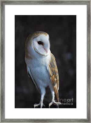 Barn Owl Framed Print by Sharon Elliott