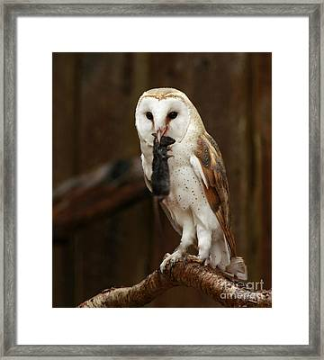 Barn Owl With Catch Of The Day Framed Print by Inspired Nature Photography Fine Art Photography