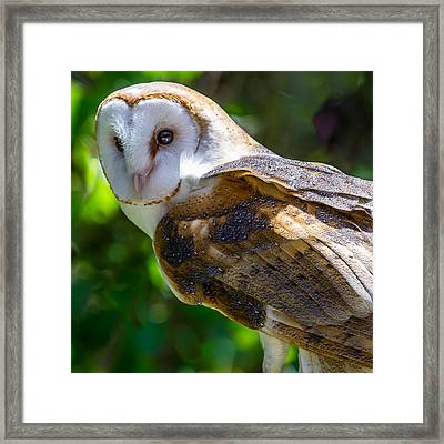 Framed Print featuring the photograph Barn Owl by Yeates Photography
