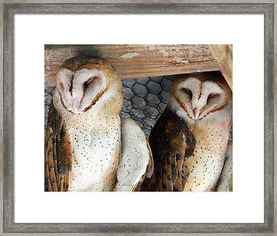 Barn Owls Framed Print by David Yunker
