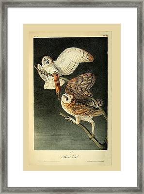 Barn Owls Framed Print