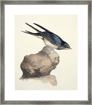 Barn Swallow, 19th Century Framed Print by Science Photo Library