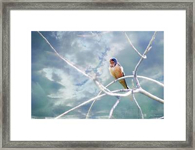 Barn Swallow On Blue Green Sky Framed Print by Julie Magers Soulen