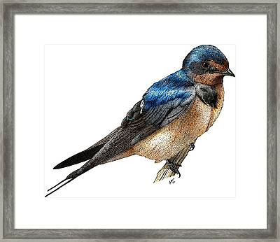 Barn Swallow Framed Print by Roger Hall