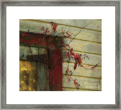 Barn Vine Framed Print by Nicki McManus