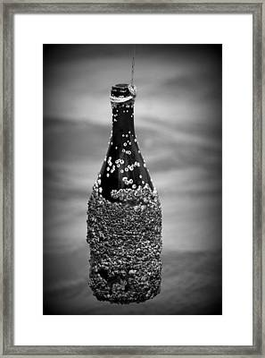 Barnacles And Wine Framed Print