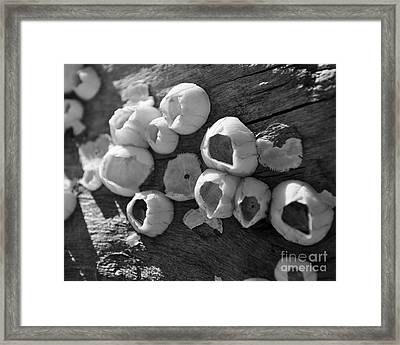Barnacles Framed Print