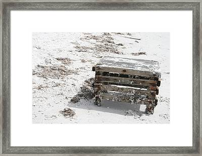 Barnacles On The Beach Framed Print by Georgia Fowler