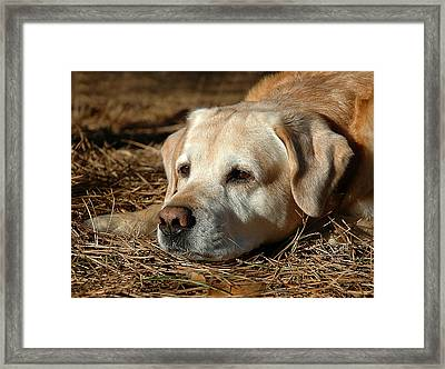 Framed Print featuring the photograph Barne by Sami Martin