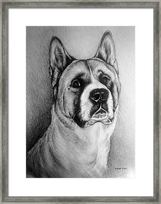 Barney Framed Print by Andrew Read
