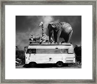 Barnum And Bailey Goes On A Road Trip 5d22705 Black And White Framed Print by Wingsdomain Art and Photography
