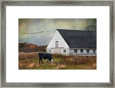 Barnyard Bliss Framed Print