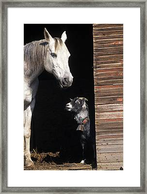 Barnyard Buddies Framed Print by Latah Trail Foundation