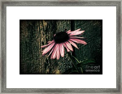 Framed Print featuring the photograph Barnyard Coneflower by Marjorie Imbeau