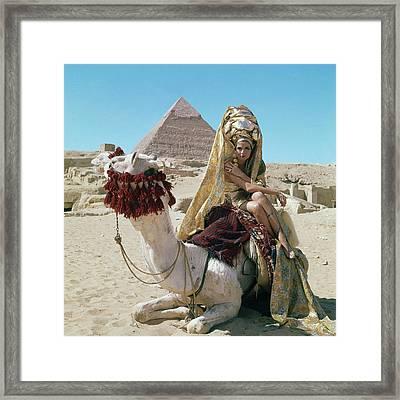 Baronne Van Zuylen On A Camel Framed Print