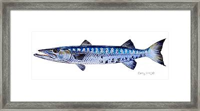 Barracuda Framed Print by Carey Chen