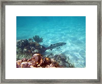 Framed Print featuring the photograph Barracuda by Eti Reid