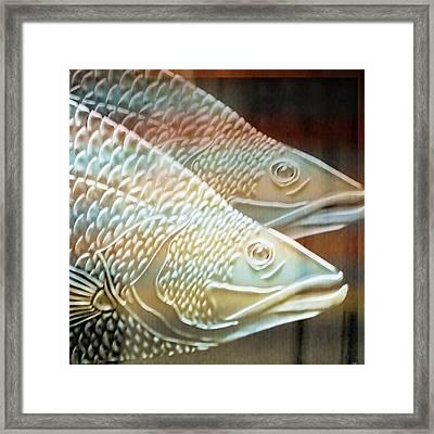 Barramundi Framed Print by Holly Kempe