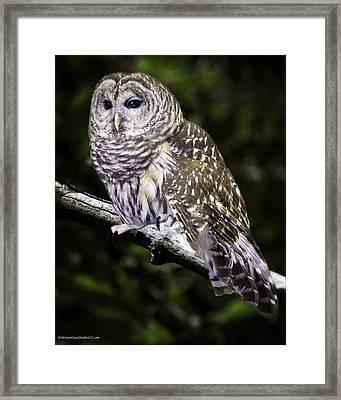 Barred Night Owl Framed Print by LeeAnn McLaneGoetz McLaneGoetzStudioLLCcom