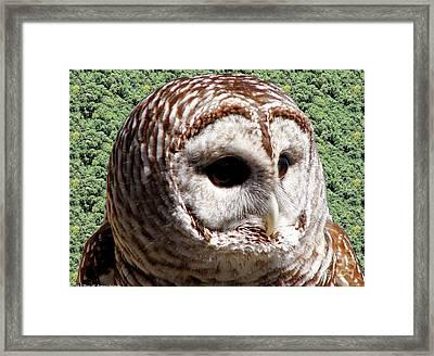 Barred Owl 2 Framed Print by Rose Santuci-Sofranko