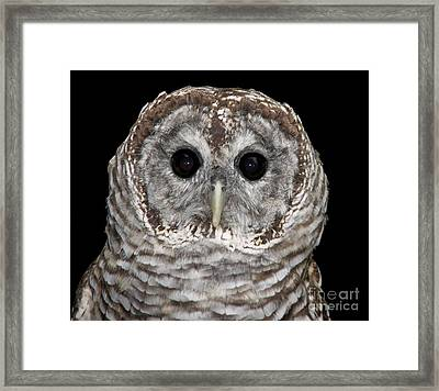 Barred Owl 3 Framed Print